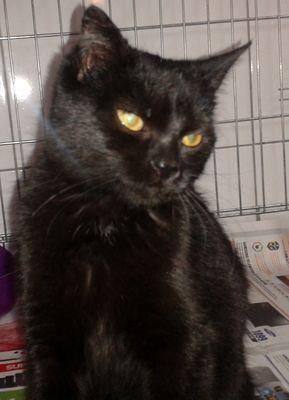 Oglądasz obrazki z tematu: Czarna kotka znaleziona na ul. Pułkowej
