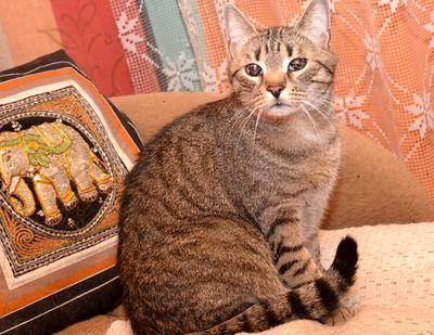 Oglądasz obrazki z tematu: Umrzeć, tego się nie robi kotu...- Tofik ma dom:)