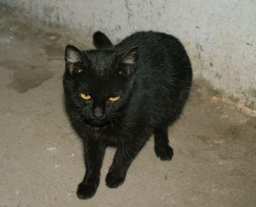 Oglądasz obrazki z tematu: Czarny kotek znaleziony na Boh. Monte Cassino