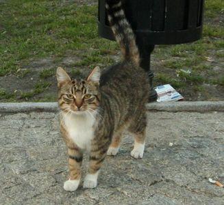Oglądasz obrazki z tematu: Szaro-biała kotka znaleziona na ul. Kilińskiego