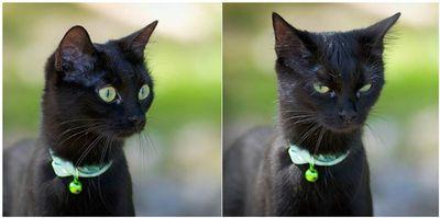 Oglądasz obrazki z tematu:  Czarna kotka zaginęła w Dzikich