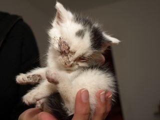 Oglądasz obrazki z tematu: Problemy z kotami :(