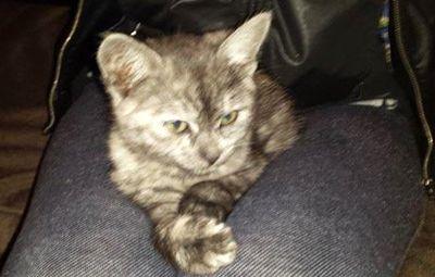 Oglądasz obrazki z tematu: Dymna kotka zaginęła na Leśnej Dolinie