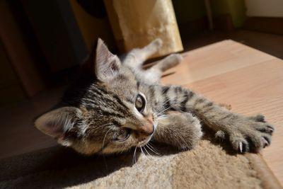Oglądasz obrazki z tematu: Pozdrowienia od Tygrysi