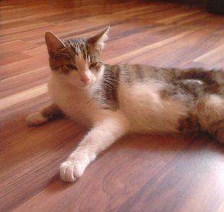 Oglądasz obrazki z tematu: Biało szara koteczka znaleziona na ul. Gajowej