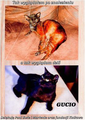 Oglądasz obrazki z tematu: Kocia przemiana
