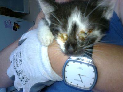 Oglądasz obrazki z tematu:  Do przemiany kota wystarczy odrobina serca