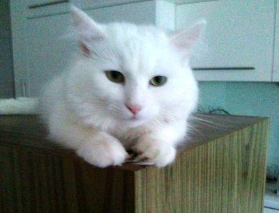 Oglądasz obrazki z tematu:  Koteczka Bella pozdrawia panią Jasię