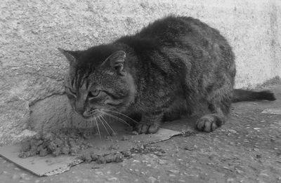 Oglądasz obrazki z tematu: Kot z Krynek [*]