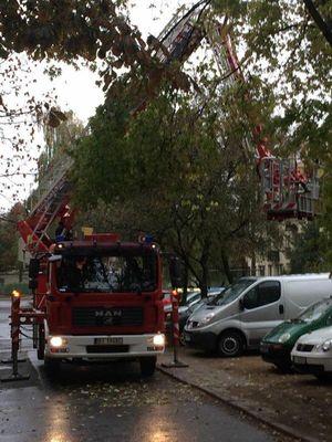 Oglądasz obrazki z tematu: Kasztanek spadł z drzewa ;)