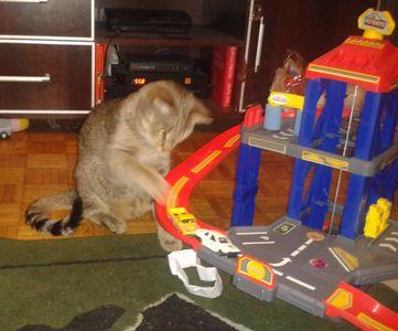 Oglądasz obrazki z tematu: Kotek Anio pozdrawia  Panią Magdę
