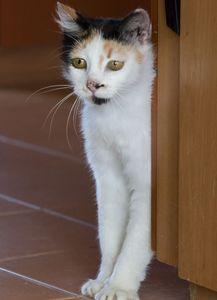 Ogl�dasz obrazki z tematu: W Domach Tymczasowych Kotkowa Czekaj� na Ciebie: