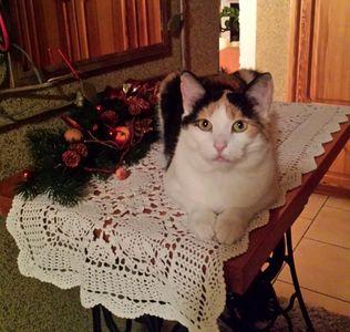 Oglądasz obrazki z tematu: Leosia pozdrawia Świątecznie