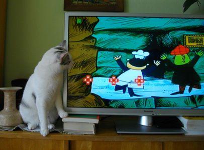 Oglądasz obrazki z tematu: Kicia Daisy pozdrawia p. Jagodę