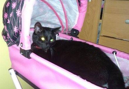 Oglądasz obrazki z tematu: Salem pozdrawia panią Beatkę :)