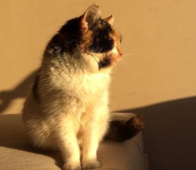 Oglądasz obrazki z tematu: Lucynka- nasza radość i miłość.