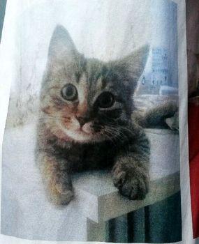Oglądasz obrazki z tematu: Szara kotka zaginęła w okol. Pułkowej