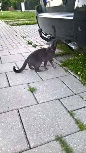 Oglądasz obrazki z tematu: Niebieski kot błąka się po os. Mickiewicza