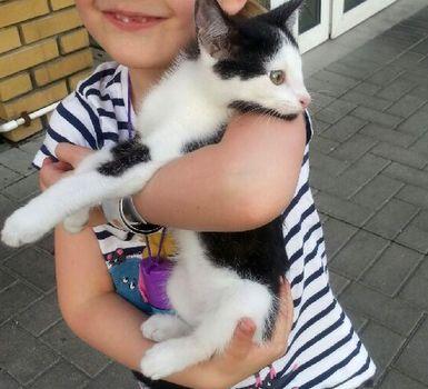 Oglądasz obrazki z tematu: Czarno biały kotek znaleziony na Duboisa