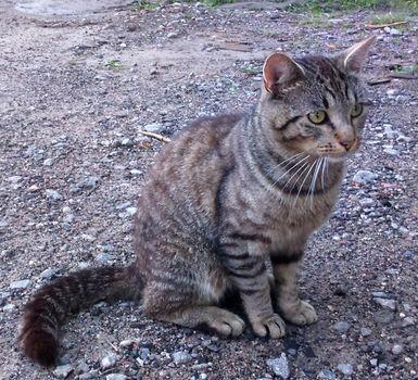 Oglądasz obrazki z tematu: Szary kotek błąka się po działkach na mickiewicza