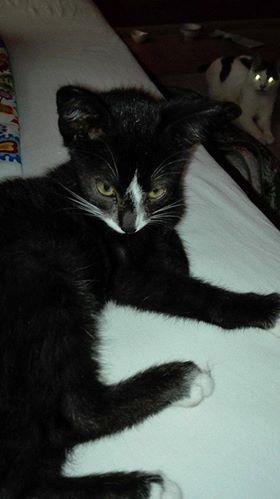 Oglądasz obrazki z tematu: Biało czarny kotek znaleziony na ul. Transportowej
