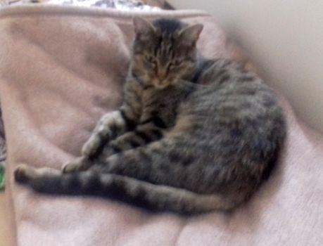 Oglądasz obrazki z tematu: Szara kotka zaginęła w Dojlidach