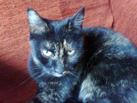 Oglądasz obrazki z tematu: Czarno ruda kotka znaleziona na Jurowieckiej