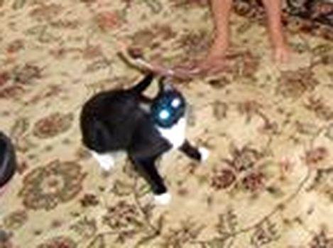 Oglądasz obrazki z tematu: Czarno biała kotka zaginęła na Malmeda