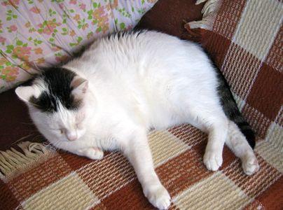 Oglądasz obrazki z tematu: Biały z szarym kot zaginął na działkach na Mickiewicza