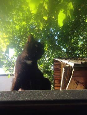 Oglądasz obrazki z tematu:  Czarna kotka zaginęła na PIeczurkach