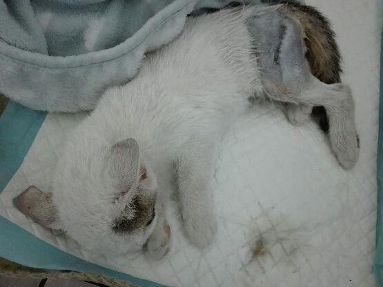 Oglądasz obrazki z tematu: Clio z uszkodzonym błotnikiem - happy end :)