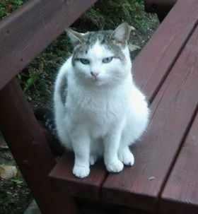 Oglądasz obrazki z tematu: Biało szary kotek błąka się po os TBS.