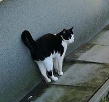Oglądasz obrazki z tematu: Czarno biały kot chodzi na Zagórnej