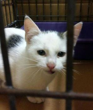 Oglądasz obrazki z tematu: MAły biały kotek znaleziony na al. Jana Pawła II