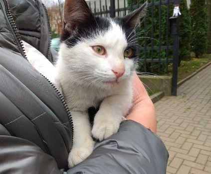 Oglądasz obrazki z tematu: Biało czarny kotek znaleziony w okol. Politechniki