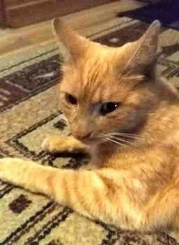 Oglądasz obrazki z tematu: Rudy kotek znaleziony na ul. Studziennej