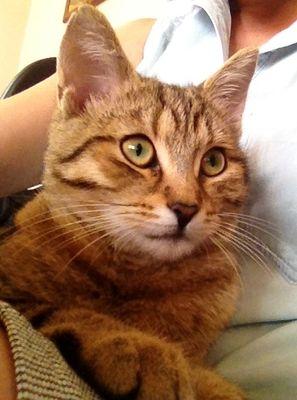 Oglądasz obrazki z tematu: Szara kotka zaginęła na os. Wygoda