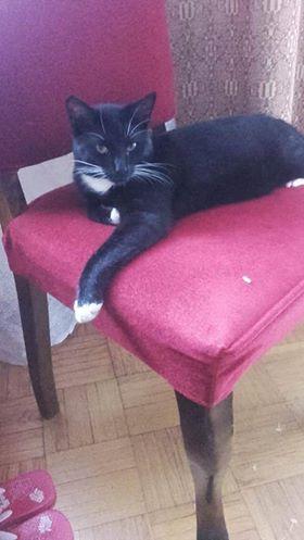 Oglądasz obrazki z tematu: Czarno biały kot zaginął na ul. Brukowej