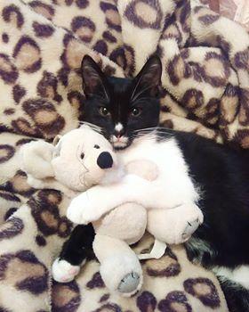 Oglądasz obrazki z tematu: Czarno biały kotek zaginął na os. Jaroszówka