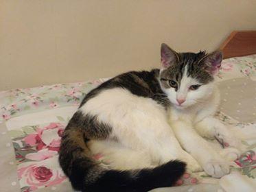 Oglądasz obrazki z tematu:  Biało szara kotka znaleziona na ul. Plażowej