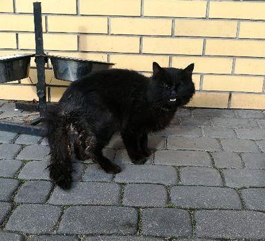Oglądasz obrazki z tematu: Czarny puchaty kot znaleziony na ul. Produkcyjnej