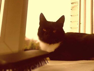 Oglądasz obrazki z tematu: Czarno biały kot zaginął w Supraślu