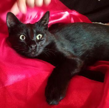 Oglądasz obrazki z tematu: Umrzeć, tego się nie robi kotu  (W. Szymborska) - jest dom:)