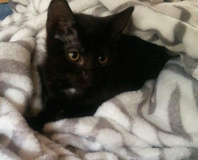 Oglądasz obrazki z tematu: Czarna kotka zaginęłąna os. Dziesięciny