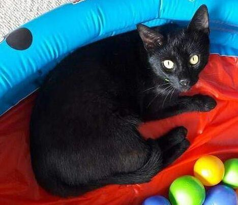 Oglądasz obrazki z tematu: Czarny kot zaginął na os.Skorupy / Przemysłówka, Dojlidy,