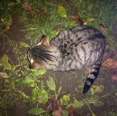 Oglądasz obrazki z tematu: Szara kotka błaka się po Palmowej