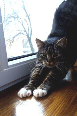 Oglądasz obrazki z tematu: Szara kotka zaginęła na Wołodyjowskiego