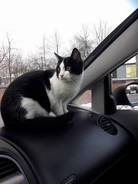 Oglądasz obrazki z tematu: BIało czarny kotek znaleziony  na Wysockiego