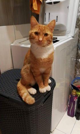 Oglądasz obrazki z tematu: Rudy kotz Antoniukowskiej odnaleziony :)