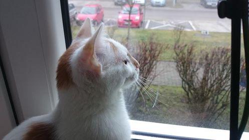 Oglądasz obrazki z tematu: Kotek biało rudy znaleziony na Duboisa